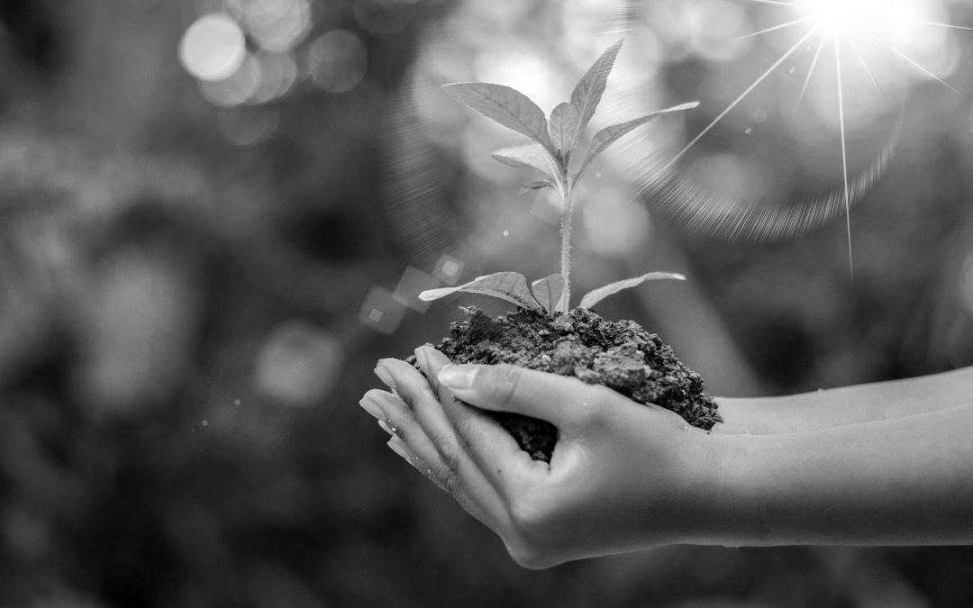 Investissement Socialement Responsable (ISR) : réconcilier la finance et l'environnement