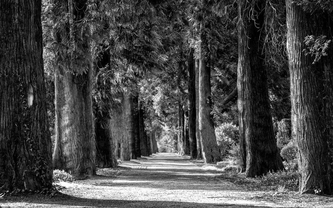 Pourquoi investir une part de votre patrimoine dans les forêts françaises ?